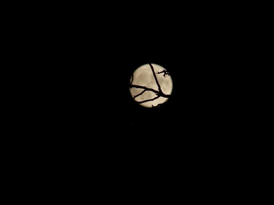 Moon, Mysticism, Branch, Night, Darkness, Full Moon