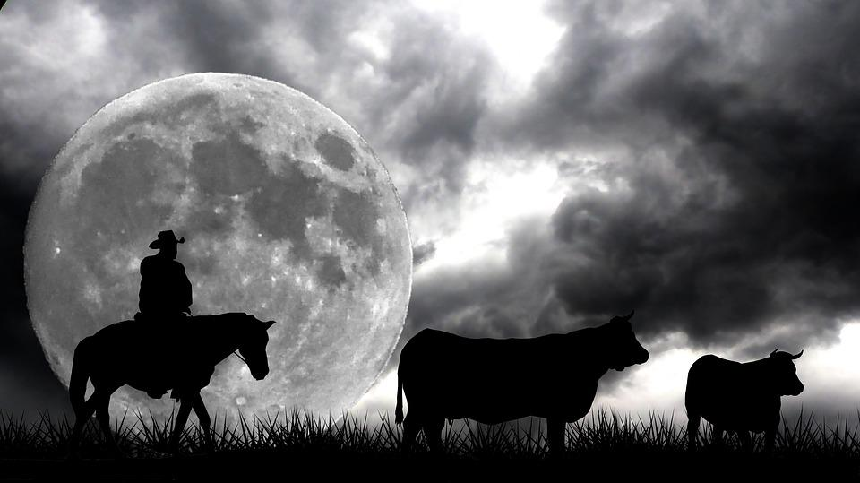 Full Moon, Western, Night, Jumper, Cow, Travel, Sky
