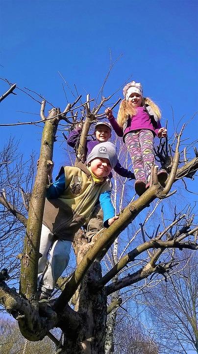 Climbing, Children, Fun, Tree, Playground, Child