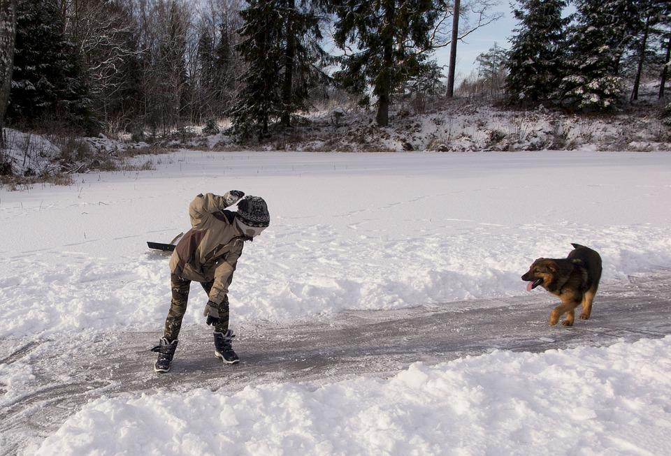 Fun, Winter, Dog, Boy, Snow, Children, Animal, Pet