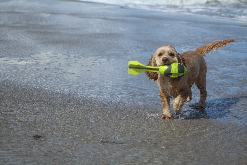Dog On Beach, Play, Fun, Joy, Movement, Summer, Sea