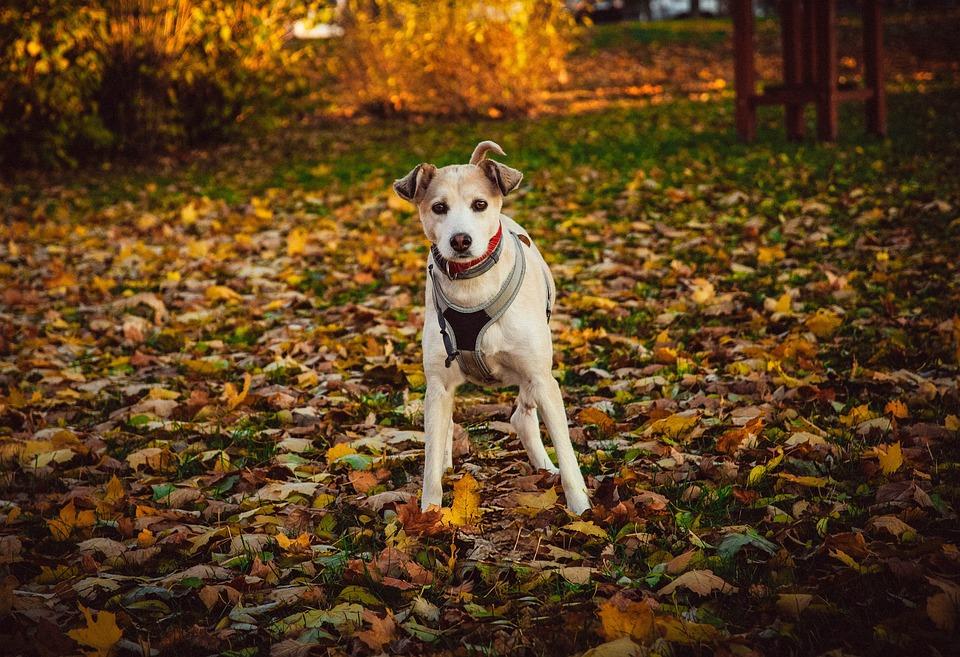 Dog, Spacer, Mammal, Doggy, Sweet, Puppy, Nice, Fun