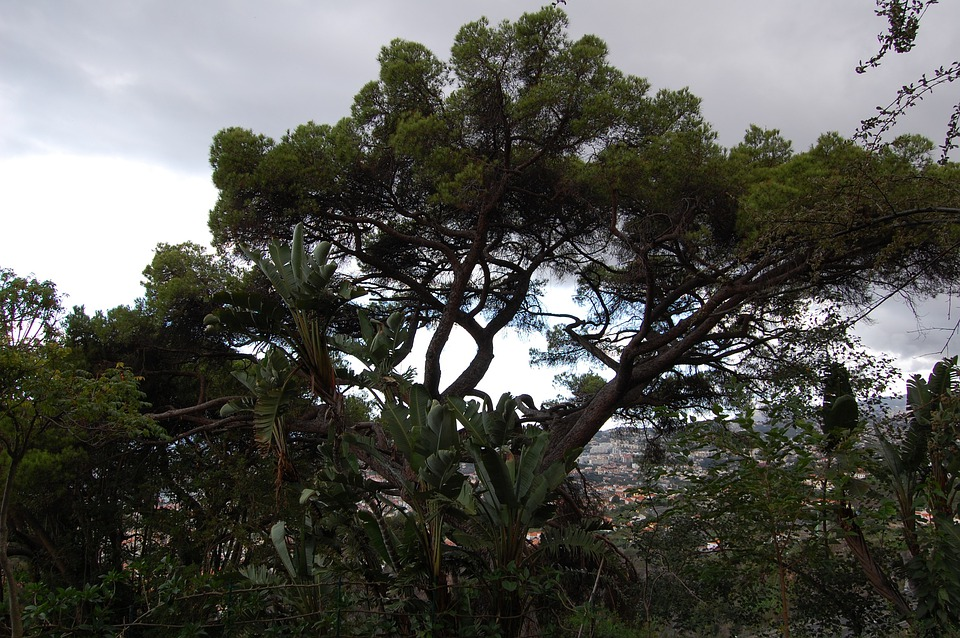 Madeira, Funchal, Botanical Garden