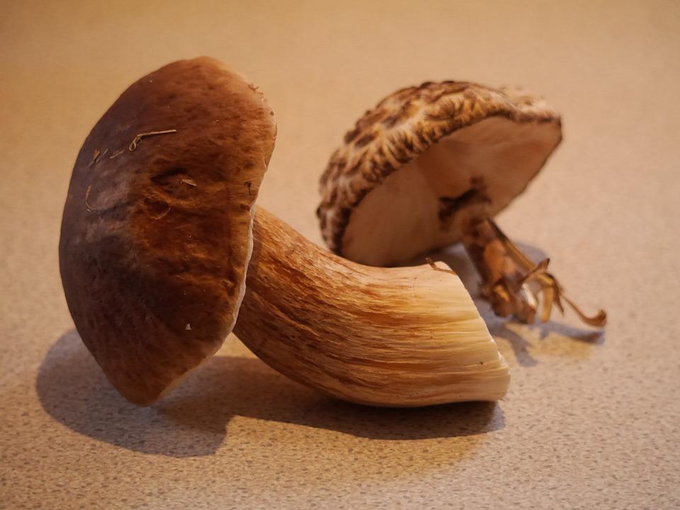 Bolete, Mushroom, Fungi, Edible, Boletus, Fungus, Cap