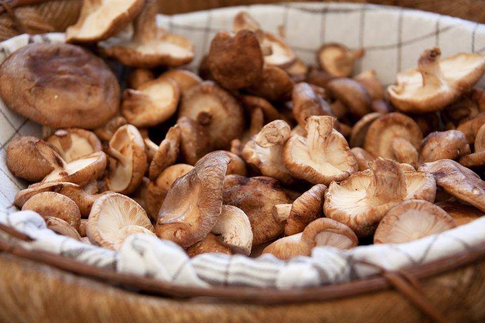 Basket, Brown, Cuisine, Eat, Edible, Food, Fungi