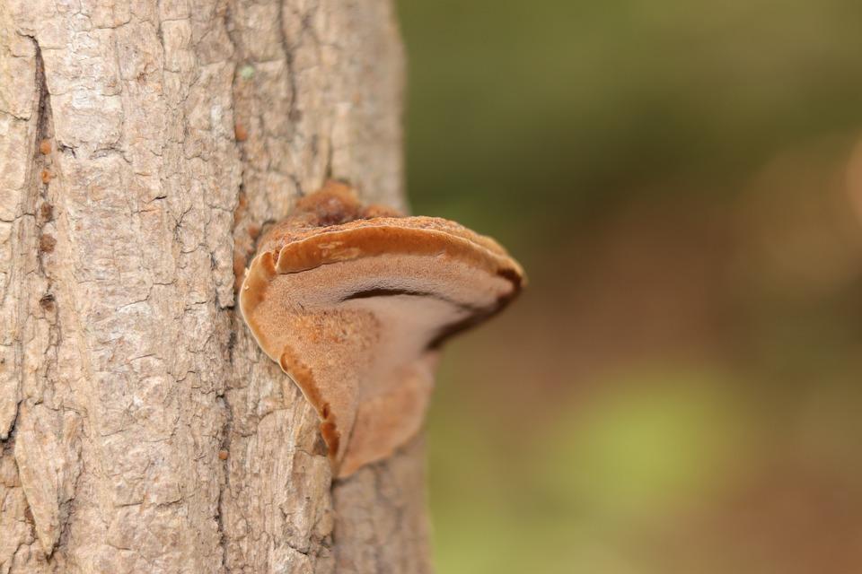 Mushroom, Wild Mushroom, Nature, Wild, Fungus, Fungi