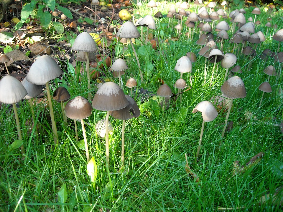 Mushrooms, Fungi, Nature, Green, Grass, Autumn, Forest