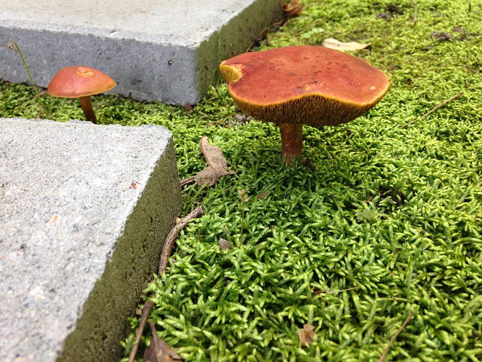 Botanical, Mushroom, Nature, Moss, Fungus, Fungi