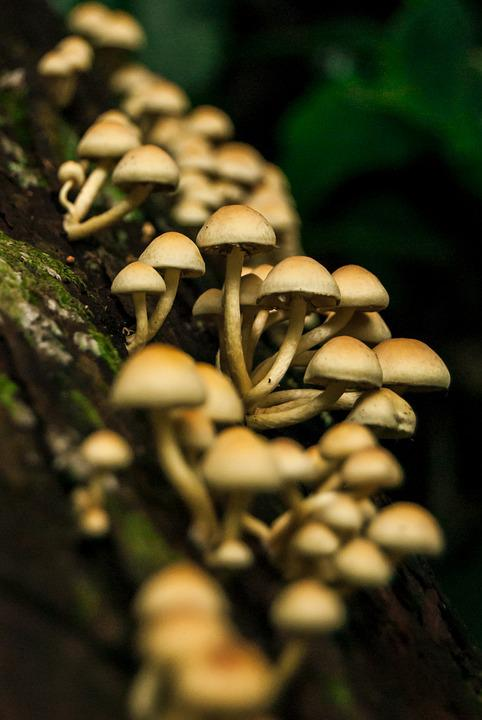 Mushrooms, Natura, Nature, Forest, Woods, Fungus, Trunk