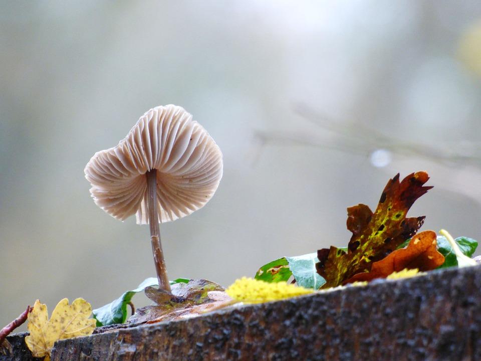 Fungus, Forest, Strain, Leaves, Fall, Nature, Magic