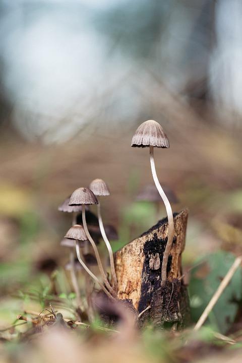 Mushroom, Forest, Magic, Nature, Fungus, Fungi, Autumn