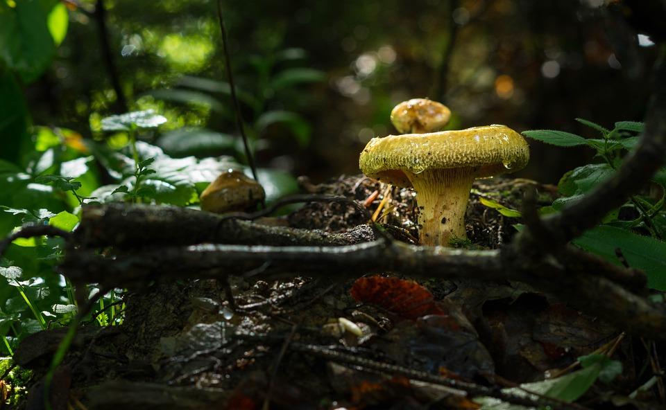 Fungus, Mushroom, Nature, Wood, Moss