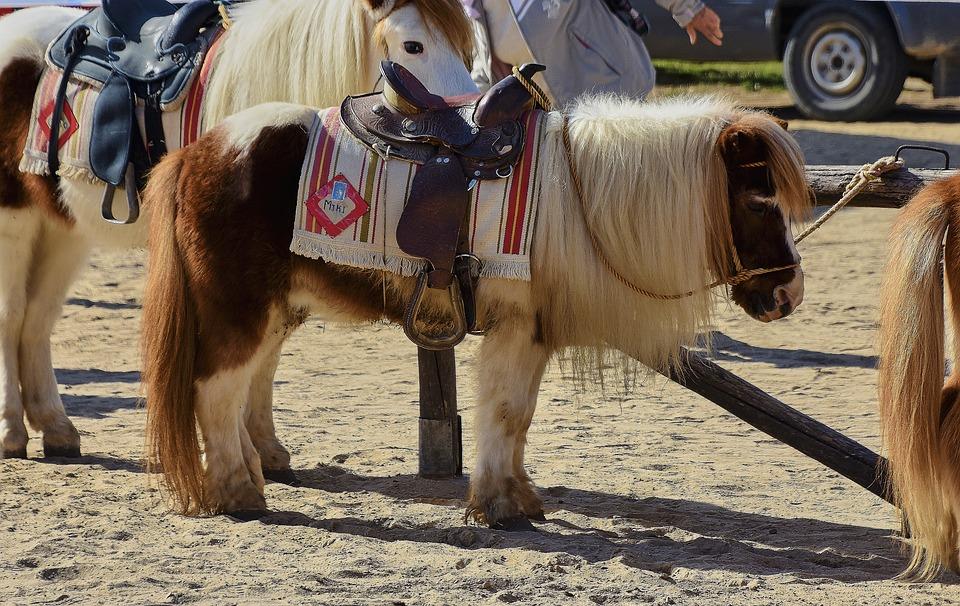 Pony, Horse, Animals, Cute, Funny