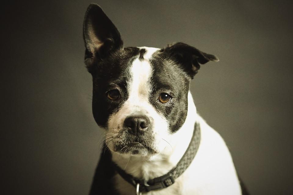 Cool Funny Canine Adorable Dog - Funny-Canine-Breed-Eye-Dog-Cute-Looking-Animal-2178696  HD_551695  .jpg