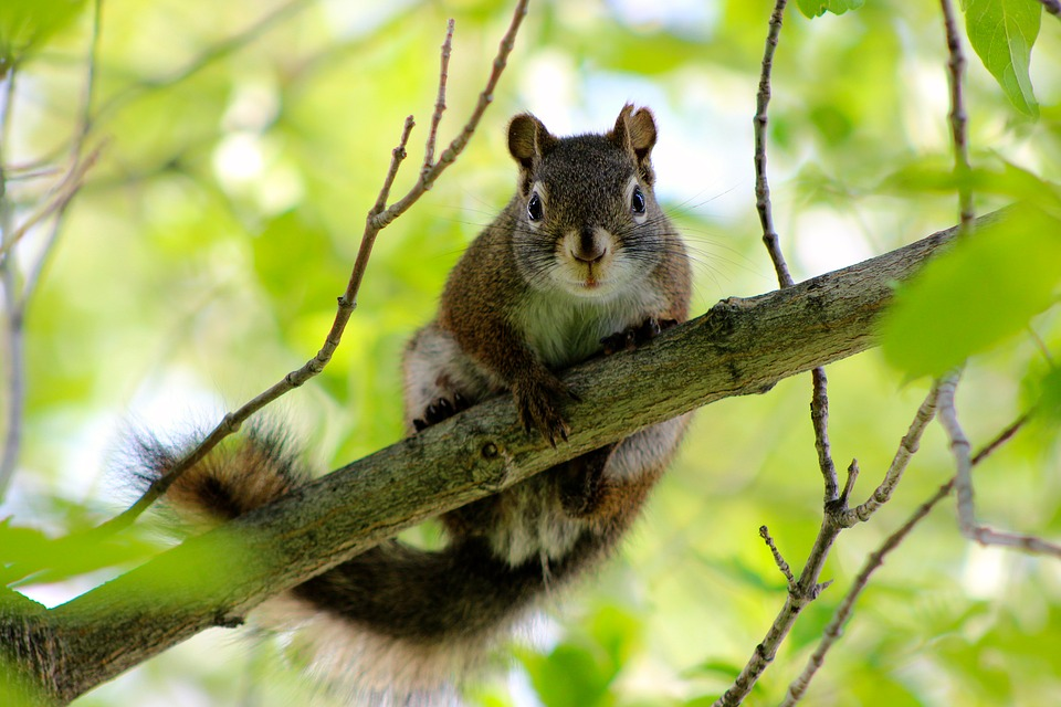 Squirrel, Tree, Branch, Curious, Funny