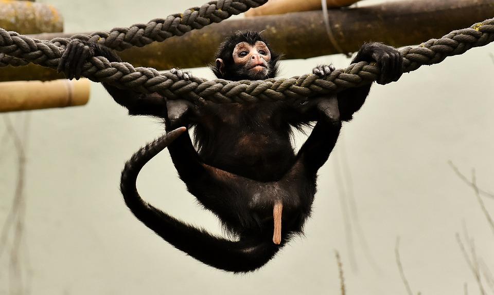 Monkey, Climb, Young Animal, Funny, Cute, Animal World
