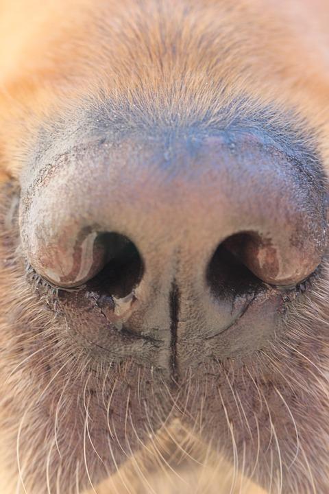 Dog, Nose, Dog Nose, Canine, Animal, Funny Dog, Doggy