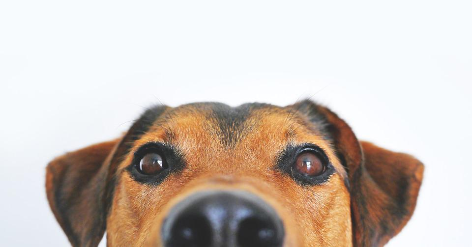 Dog, View, Funny, Sweet, Animal Portrait, Eyes, Dear