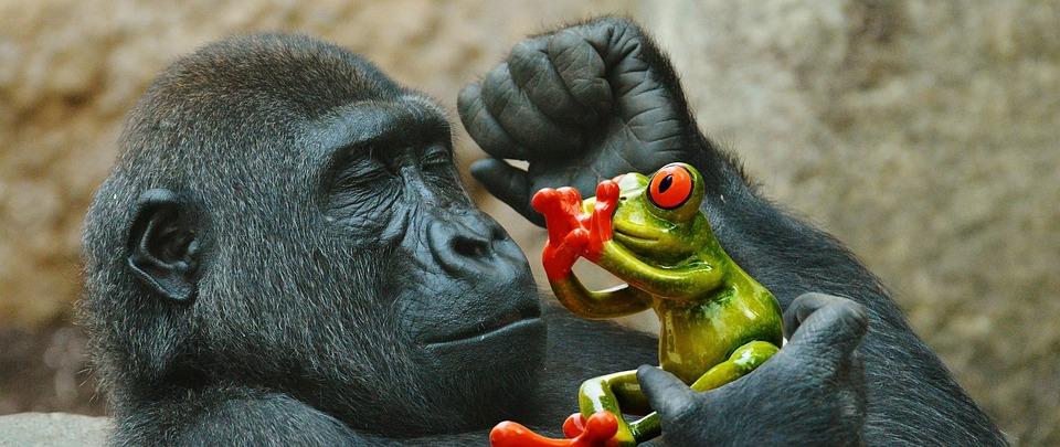 Monkey, Gorilla, Eat, Frog, Fear, Funny, Zoo, Animal