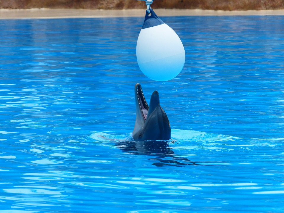 Bottlenose Dolphin, Dolphin, Play, Fun, Funny