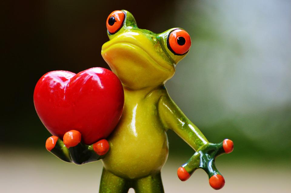 Love, Valentine's Day, Pose, Heart, Funny, Frog, Animal