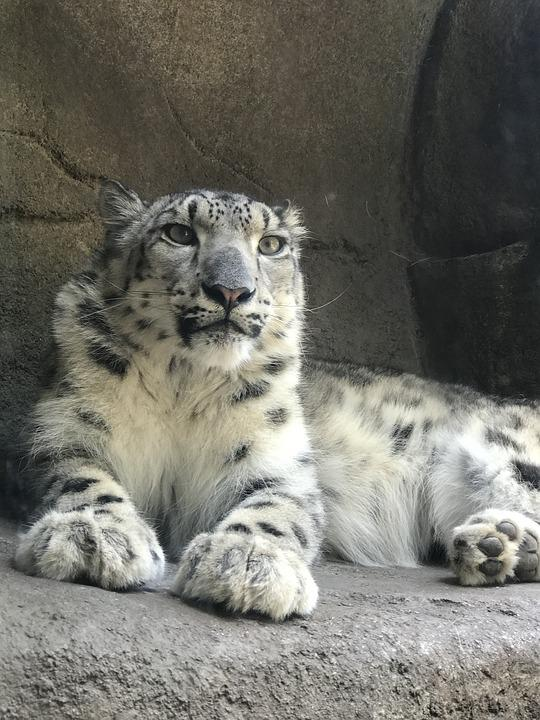 Spotted Leopard, Zoo, Animal, Fur, Cat, Exotic