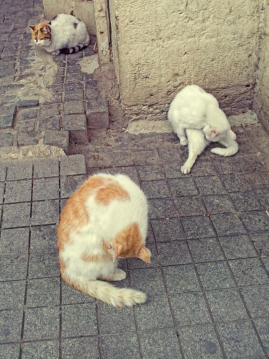 Cat, Animals, Animal, Fur, Cat Wash, Istanbul