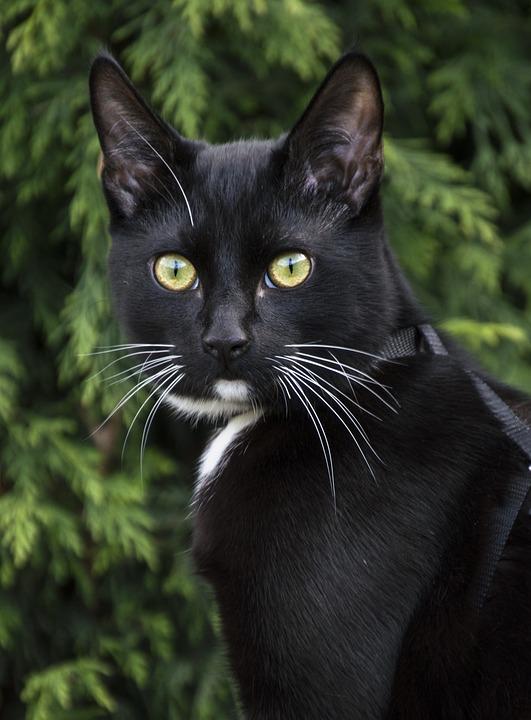 Animals, Cat, Mammals, Portrait, Charming, Pets, Fur
