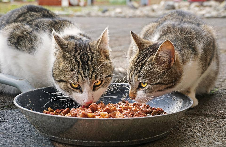 Cats, Eating, Food, Cat Food, Street Cats, Sweet, Fur