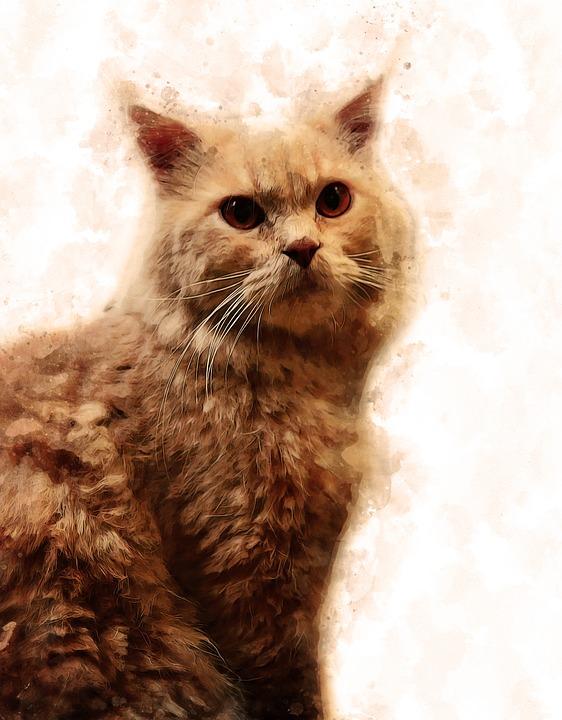 Cat, Pet, Animal, Cute, Mammal, Portrait, Adorable, Fur