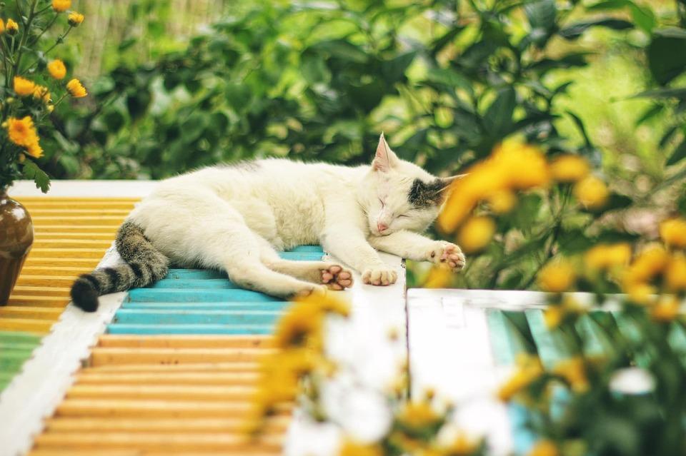 Cat, Pet, Feline, Animal, Fur, Kitty, Sleeping, Lying