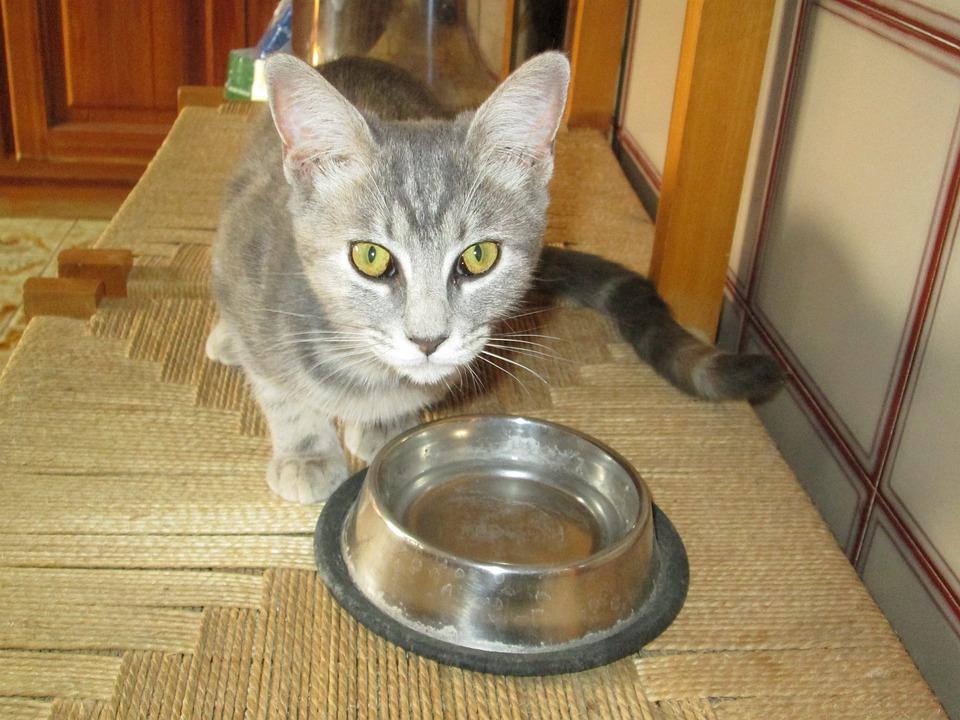 Kitten, Cat, Feline, Pet, Fur, Grey, Eyes