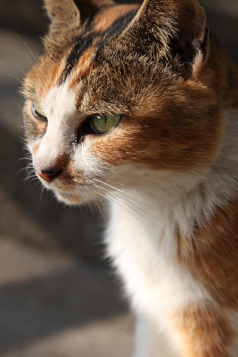 Cat, Stray, Animal, Cute, Fur, Feline, Soft, Homeless
