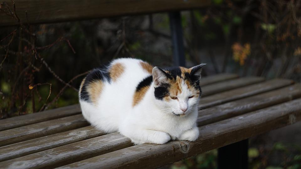 Cat, Pet, Feline, Animal, Fur, Mammal, Kitty, Domestic
