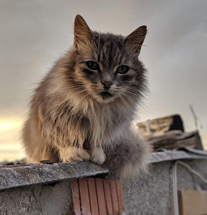 Cat, Posing, Animal, Portrait, Feline, Fur, Posture