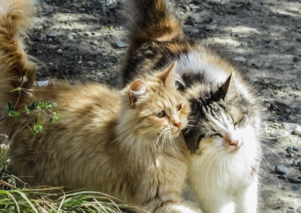 Cat, Stray, Animal, Fur, Cute, Kitten, Friends, Mammal