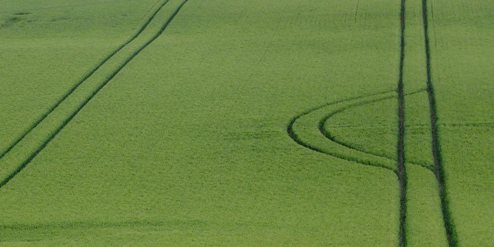 Furrows, Agriculture, Green