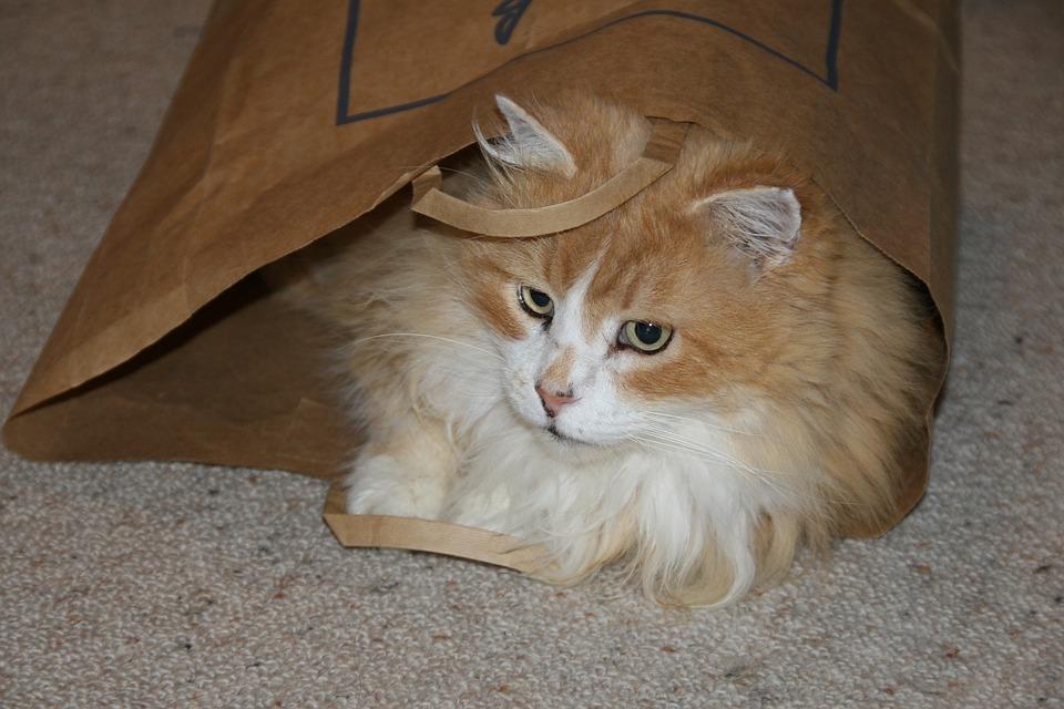 Cat, Ginger, Cute, Pet, Animal, Fur, Furry, Playing