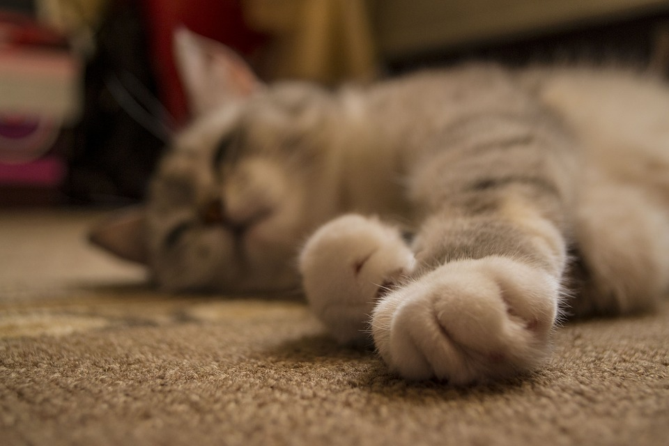 Cute, Animals, Pet, Cat, Little, Paw, Furry, Home