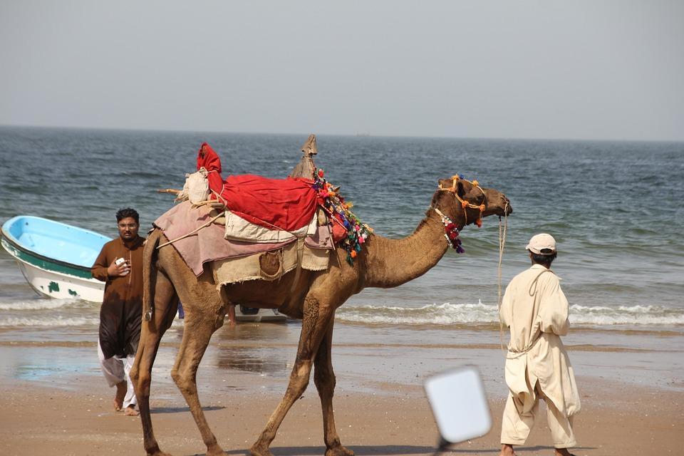 Gadani, Balochistan, Pakistan, Camel, Beach, Summer