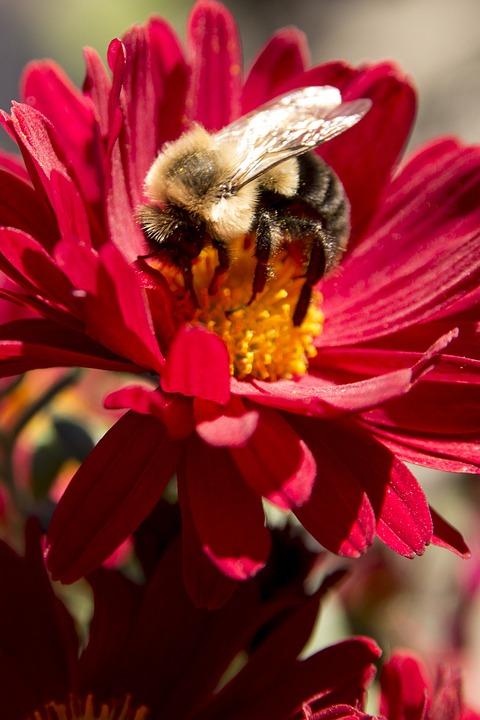 Flower, Gadfly, Nature
