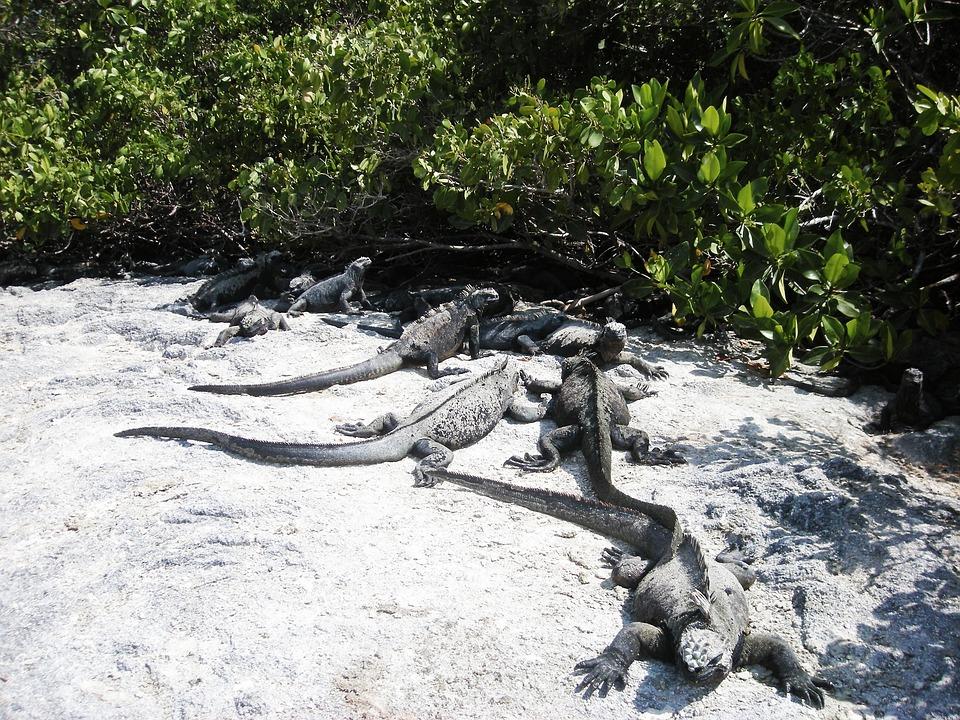 Marine, Water, Rocks, Island, Galapagos, Ecuador