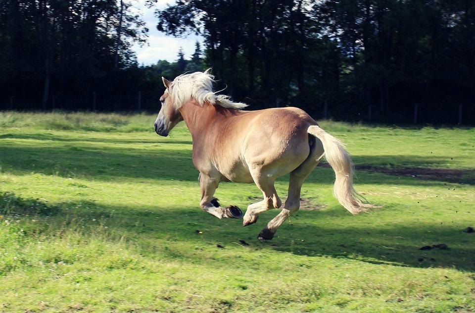 Horse, Running, Freedom, Wild, Animal, Equine, Gallop