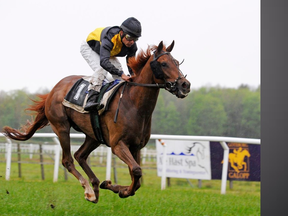 Gallop, Horse, Horse Racing