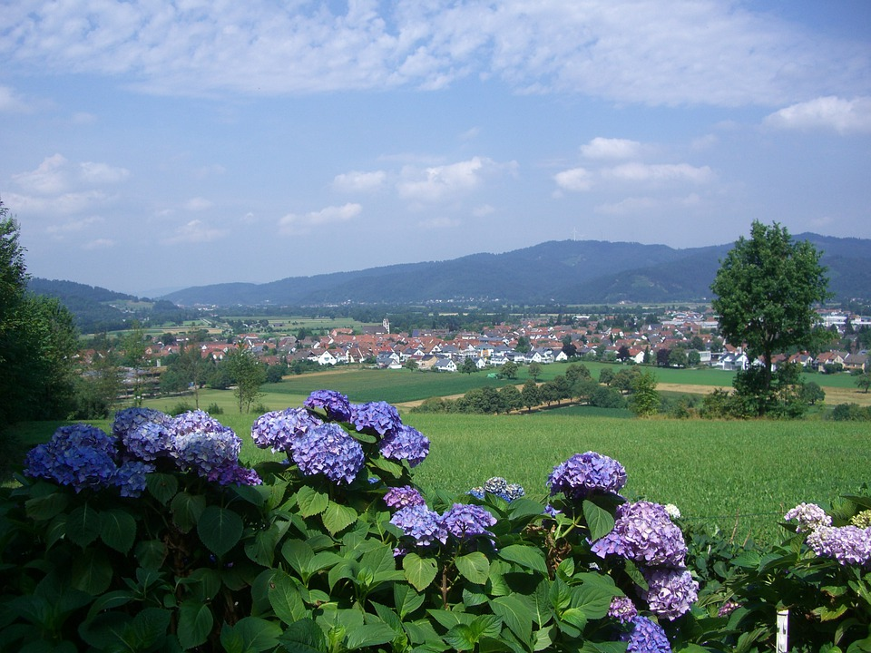 Hydrangeas, Gamis, Kirchzarten