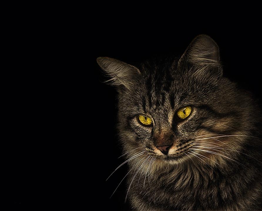 Cat, Animal, Feline, Pet, Garden, Animal Advertising