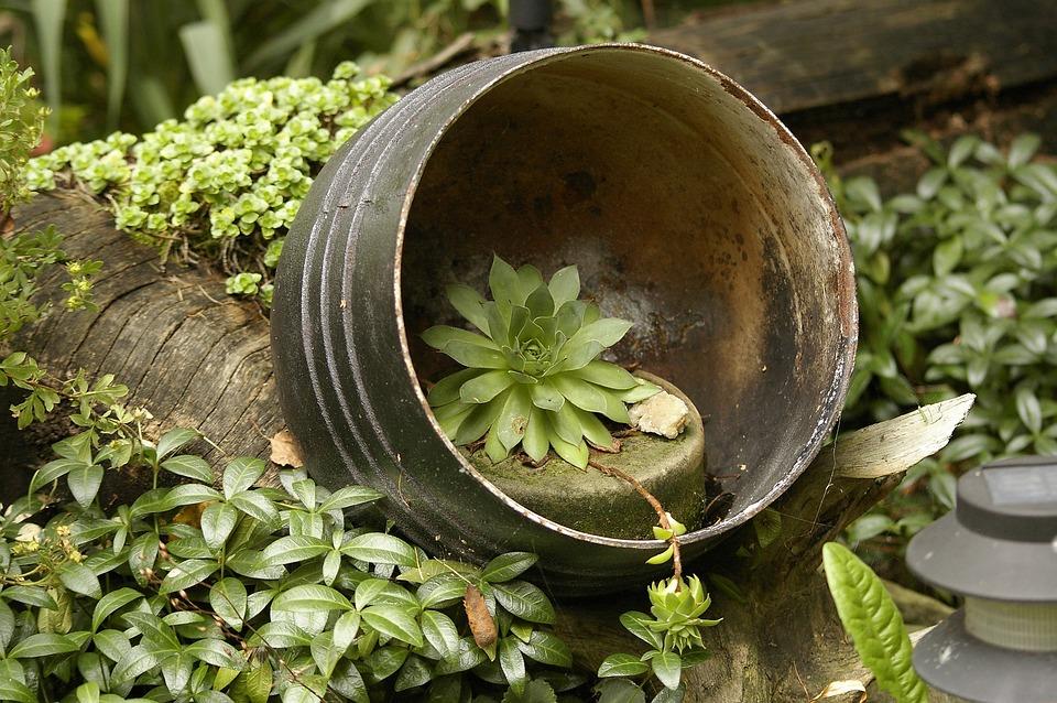 Garden, Plants, Arrangement, Garden Plants, The Idea Of