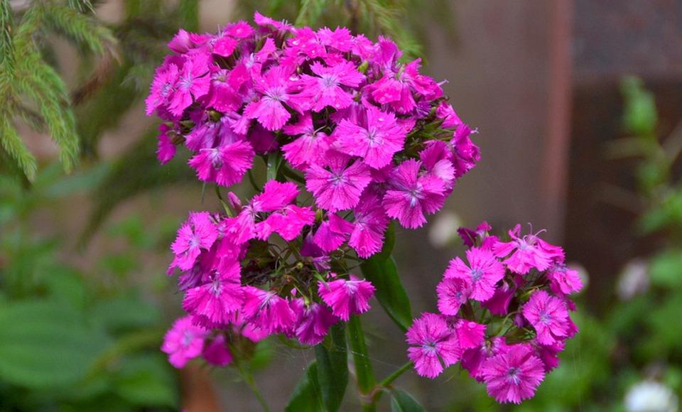 Flowers, Beauty, Spring, Garden