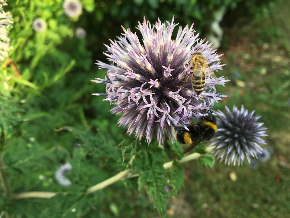Flower, Bee, Hummel, Insect, Garden, Sprinkle