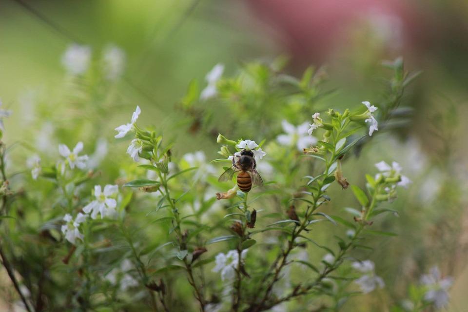 Nature, Bee, Garden